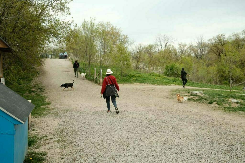 Etobicoke Valley Dog Park - an inside view of the entrance from within the dog park