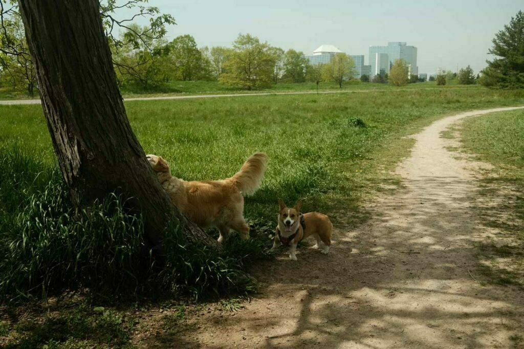 Day Use Off Leash Trail at Dog-Friendly Bronte Creek Provincial Park