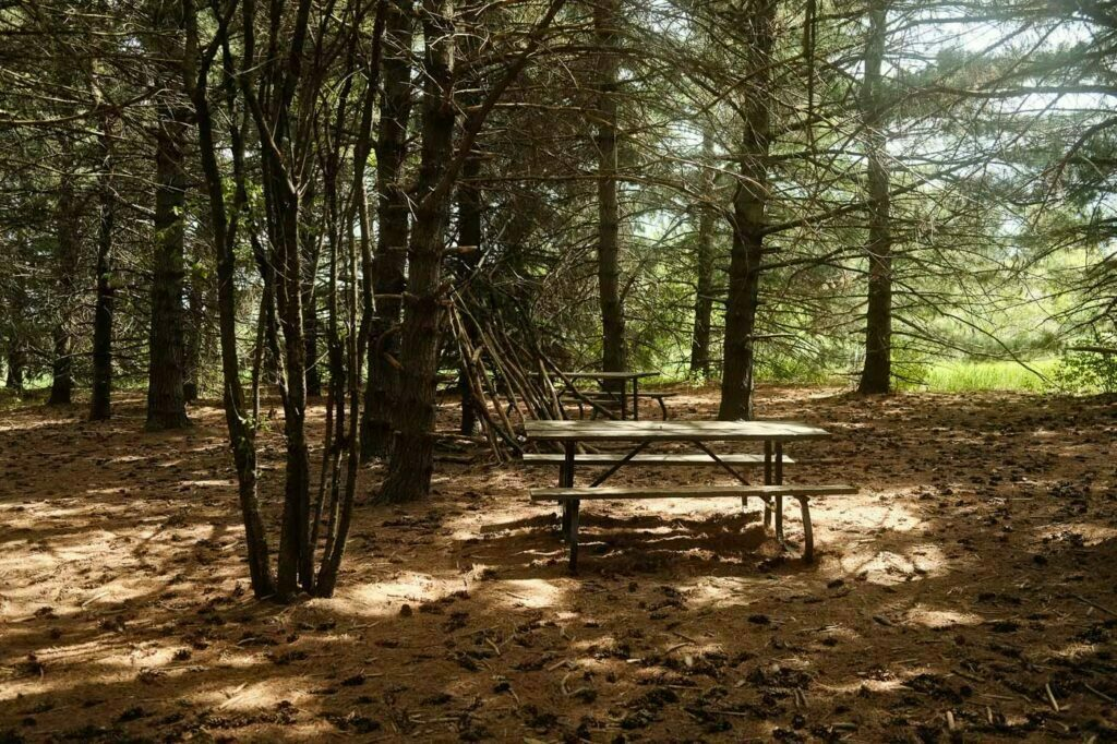Shaded Picnic Bench located inside the Day Use's Leash Free Trail of Bronte Creek Provincial Park