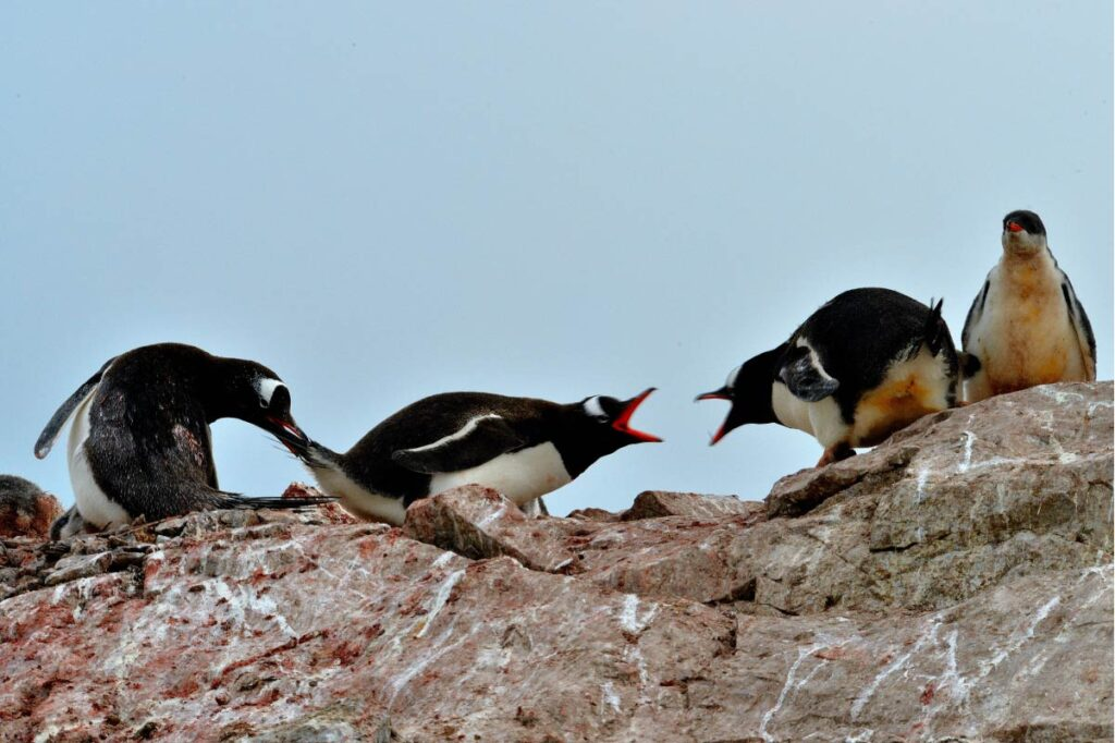 Penguins Arguing - Credit: Long Ma from Unsplash  Like these penguins, crankiness can be