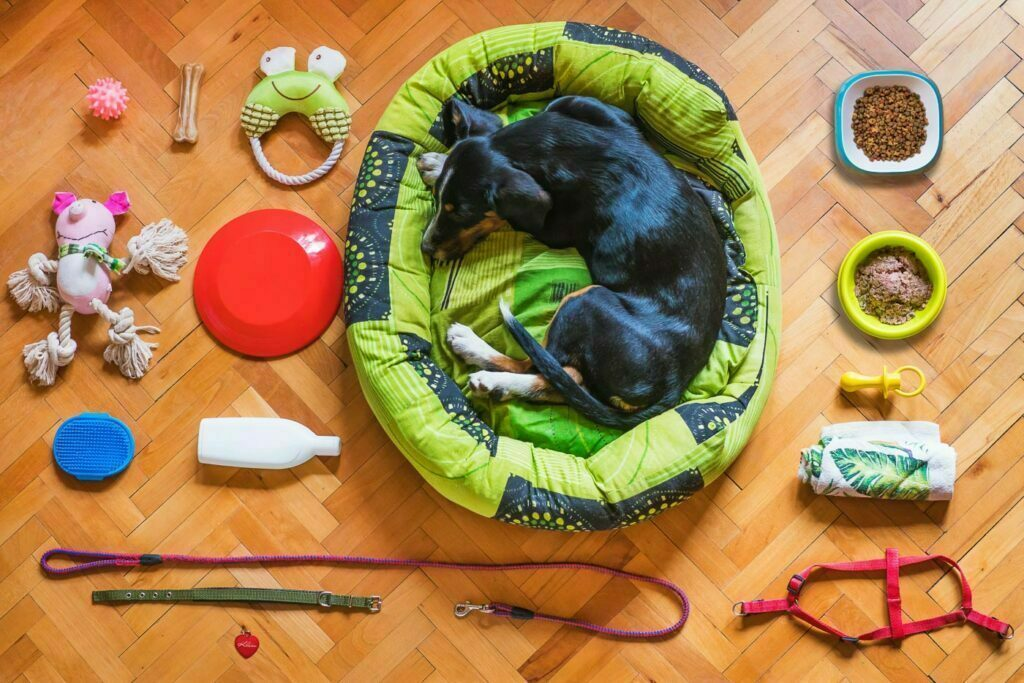 Dog in a dog bed, flat lay of basic essentials for dogs